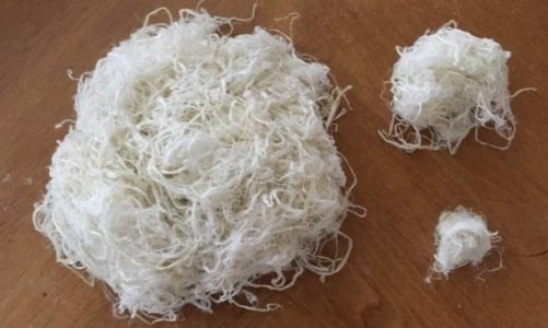 Project aims to build domestic hemp fiber supply chain – starting with 2,021 T-shirts